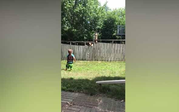 Çit engeline rağmen köpekle oynayan ufaklık