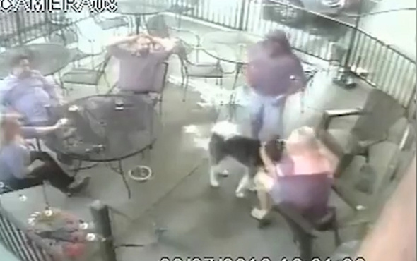 Köpek kadının yüzünü işte böyle parçaladı