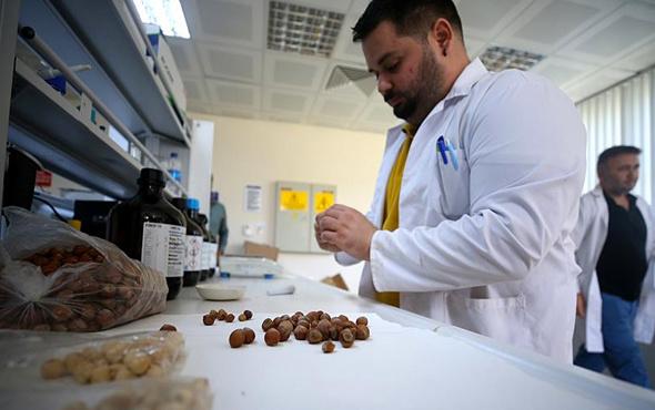 Fındıktan kemoterapi ilacı pilot üretim aşamasında