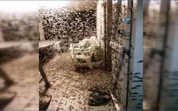 Fransa'da bir şehri kelebek bastı