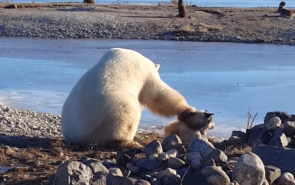 Köpeğin başını okşayan kutup ayısı sosyal medyayı salladı