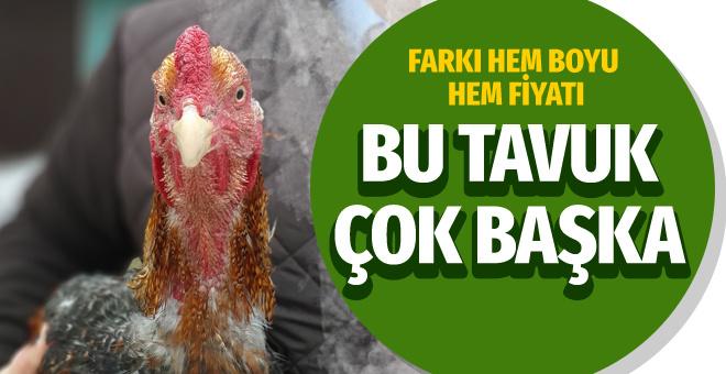 Bu tavuk başka tavuk Bursa'da üretildi boyu 1 metreyi aştı
