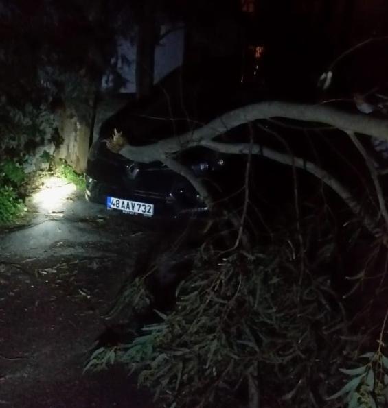 Bodrum'da dereler taştı, ağaçlar devrildi, araçlar yolda kaldı