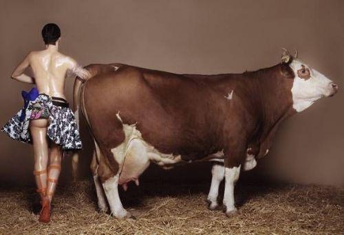 влагалише коровы фото