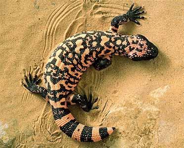 Dünyanın en zehirli 7 hayvanı