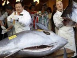 Dünyanın en pahalı balığı 750 bin dolara satıldı