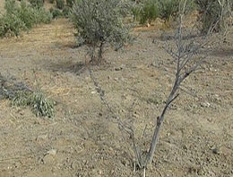 Suriye'den Hatay'a havan mermisi düştü