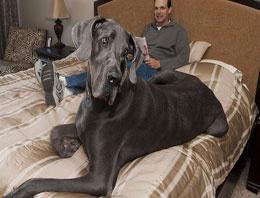 Dünyanın en büyük köpeği öldü