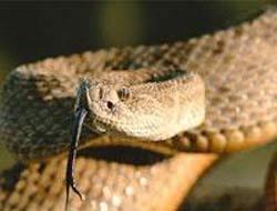 Dünyanın en küçük yılanı