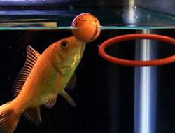 5 yıldır ters yüzen balık