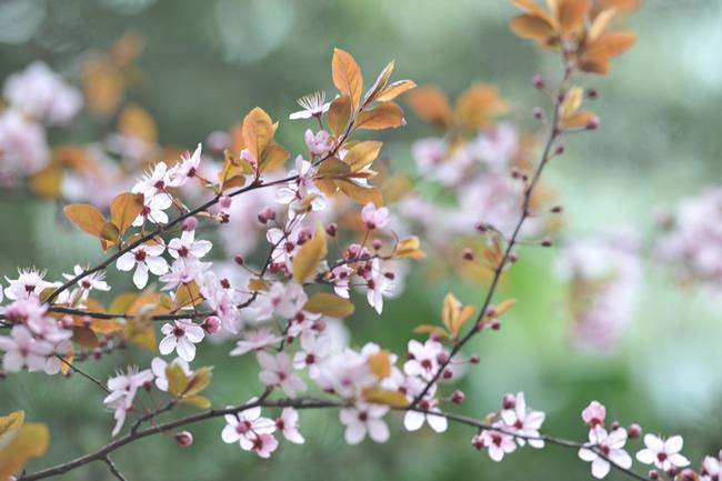 Nevruz Bayramı şiirleri Kısa Uzun 4 Kıtalık En Güzel Nevruz şiirleri