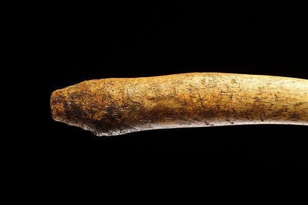 İnsanların penis kemiği ortaya çıktı dünyada bir ilk İngilizler buldu - Sayfa 2