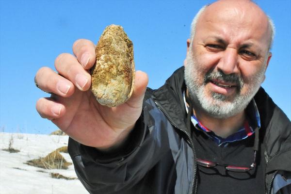 Muş'ta 11 milyon yıllık fosiller bulundu - Sayfa 3