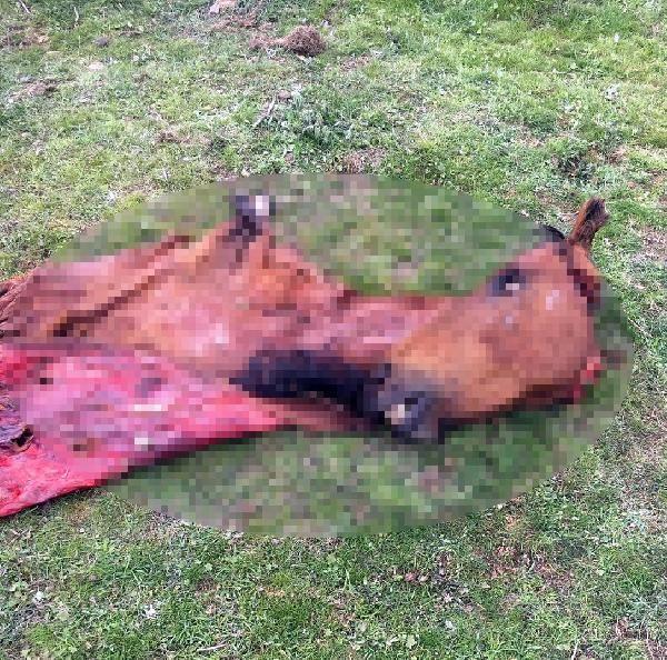Manisa'da kamyonette 800 kilo at eti ile yakalandılar! - Sayfa 2