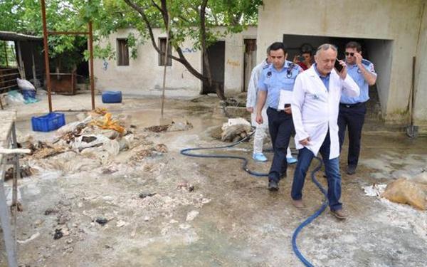 Denizli'de kaçak sakatat işleme tesisinde şok edici manzara - Sayfa 5