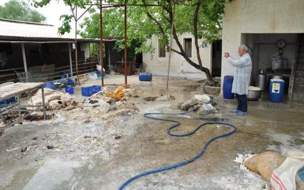 Denizli'de kaçak sakatat işleme tesisinde şok edici manzara - Sayfa 6