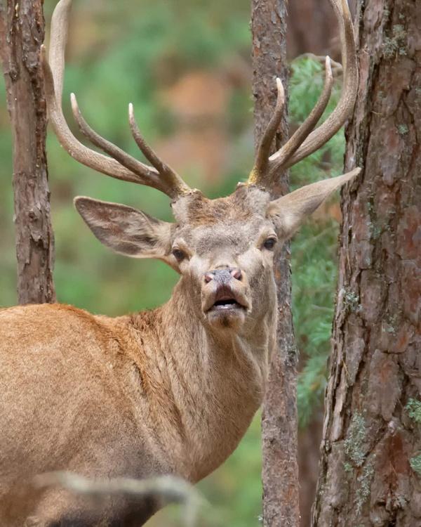 Bursa'da mahkemeden kızıl geyiklere yaşam hakkı - Sayfa 7
