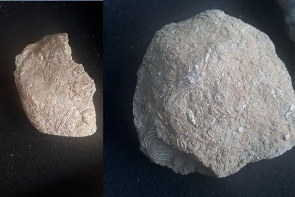 Gabar Dağı'nda bulunanlar 45 milyon yıllık çıktı Şırnak tarihini değiştirecek keşif - Sayfa 6