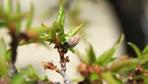 Don nasıl önlenir meteoroloji don alarmı verdi çiçekleri koruma yöntemi