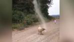 Sevimli köpek rüzgarı böyle durdurdu