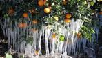 Antalya için meteorolojiden zirai don uyarısı geldi