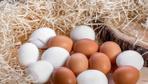 Gezen tavuk yumurtası ile kafes yumurtası arasında fark yokmuş