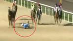 Attan düşen jokey atların altında kalmaktan son anda kurtuldu