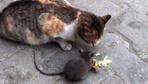 Kedi ile farenin peynir kardeşliği kamerada