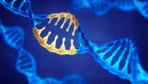 Kalp krizinin ardından hücreleri canlandıran gen tedavisi yöntemi