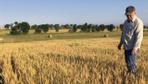 Adana'da buğday hasadı sürüyor