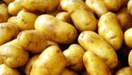 Patatesin fiyatı geriliyor tarlada 1,4 lira