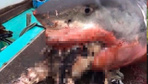 2015'ten bu yana bir ilk! Yaşlı adam canlı canlı köpekbalığına yem oldu