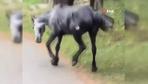 Atın içler acısı hali yürekleri sızlattı