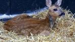 Doğada yaralı bulunan yabani hayvanlar tedavi ediliyor