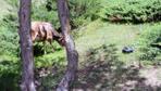 Tokat'ta yayladaki çam ağaçlarına zarar verilmesine tepki