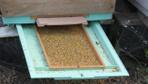 Balıkesir'de aşırı sıcak havalar arıları da olumsuz etkiledi
