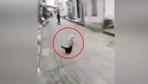 Trabzonlu cesur kedi köpeği kovaladı