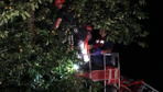 Rize'de ağaca çıkan talihsiz adam elektrik akımına kapılarak can verdi