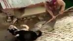 Çorum'da boğuşan köpekleri kürekle ayıran kadın hakkında şoruşturma açıldı!
