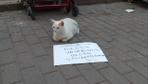 Bursa'da dilenci kedi görenleri şaşkına çevirdi