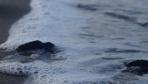 Antalya'da caretta caretta'lar denizle buluşturuldu