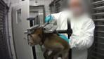 Almanya'daki bir laboratuvarda gerçekleşen hayvan deneylerinin korkunç görüntüleri
