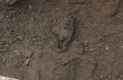 Foça'da 2 bin 100 yıllık mezarlar bulundu