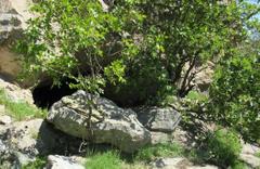 Ağaçların arkasında bulundu! PKK'nın ininden çıkanlara bakın