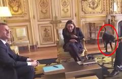 Fransa Cumhurbaşkanının makamında çişini yaptı!