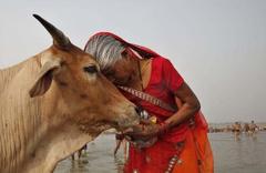 Hindistan'da inek öldürene ömür boyu hapis