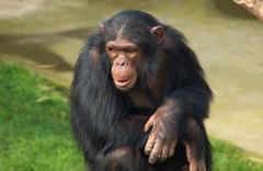 Maymunlar birlikte yaşayan kız çocuğu bulundu