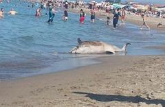 Karasu'da kıyıya vurdu: Sahil Güvenlik ekiplerine bildirildi!