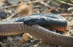 Malatya'da yılanın soktuğu vatandaş hayatını kaybetti