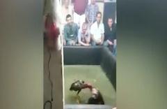 İstanbul'da horoz dövüşüne baskın